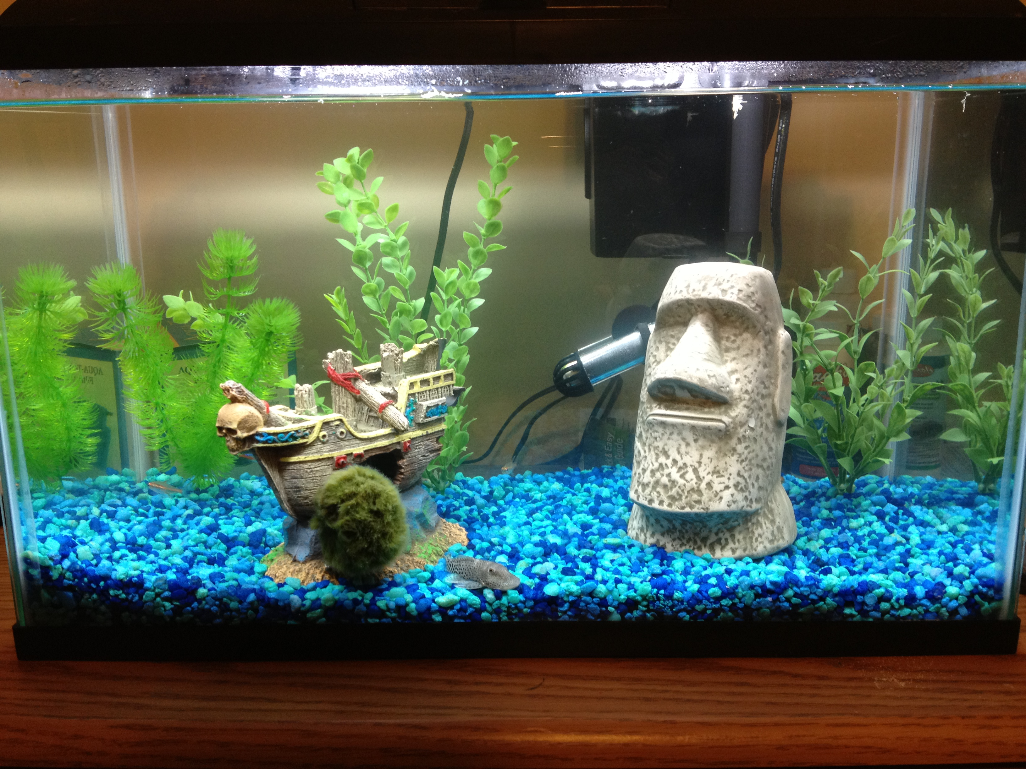 How do you clean a fish tank thecarpets co for Clean fish tank